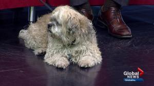 City of Calgary Animal Services Pet of the Week: Mocha