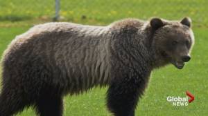 Online petition gathers thousands of signatures to save bear 148