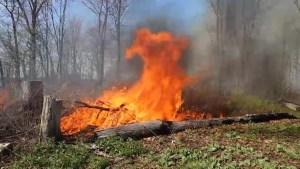 Gordon Island fire helps with regeneration
