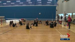 Sitting volleyball holding court in Edmonton