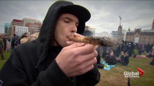 New guidelines issued for safe marijuana use