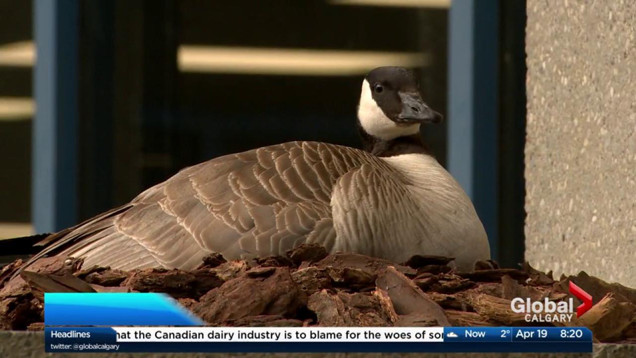 canada goose online return