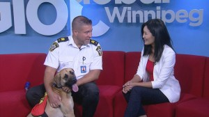 Adopt a Pal: Nala from Winnipeg Animal Services