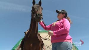 Local group saving and rehoming Standardbred race horses