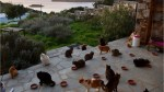 Looking for the purr-fect job? Greece needs a cat whisperer