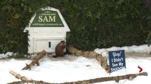 Shubenacadie Sam predicts an early Spring