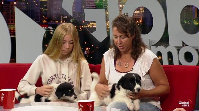Sweet pup who lost eyes steals hearts of Alberta animal rescue group