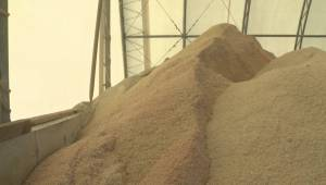 New Brunswick paying $11M more to salt roads over next two years