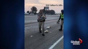 California highway patrol scramble to rescue chickens