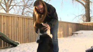 Niverville woman stunned after dog shot by pellet gun