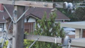 Okanagan man calls for changes after family of owls electrocuted