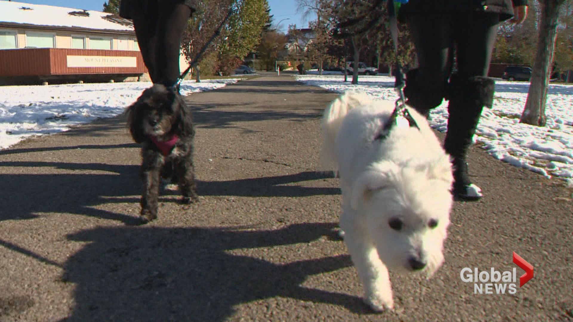 Alberta animal rescue group helps aging animals: 'the most rewarding thing I've ever done'