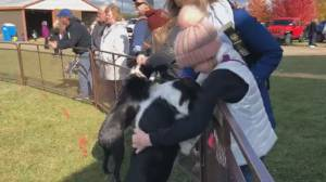 Thousands flock to 151st annual Norwood Fair