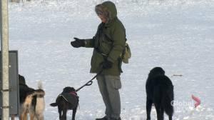Sask. dog walker says proposed bylaw amendment puts his business at risk