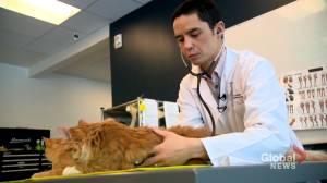 Alberta's pandemic pet boom leaving veterinarians in short supply (01:37)