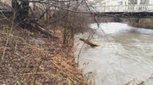 GTA seeing water levels rise, debris filling rivers as storm moves through area