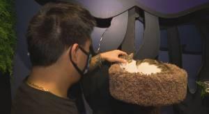 Vancouver cat café introduces online pet store amid pandemic struggles (01:36)