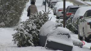 The gift of giving Christmas trees a second life
