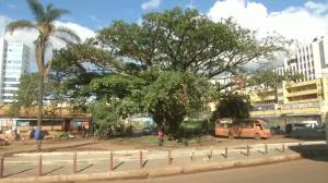 Century-old fig tree in Nairobi saved after Kenyan president issues decree (01:16)