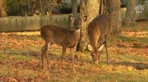 Hunter dies after deer fights back