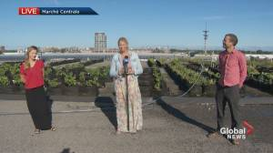 Exploring the largest urban vineyard in the world