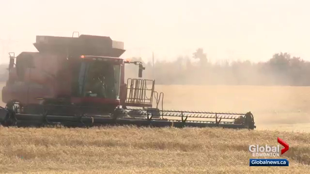 Poor weather conditions causing problems for farmers in central Alberta