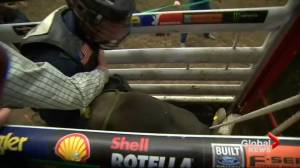 PBR bull could make the record books