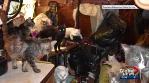 Warrants issued for 2 women after 52 'neglected' cats seized from Edmonton home