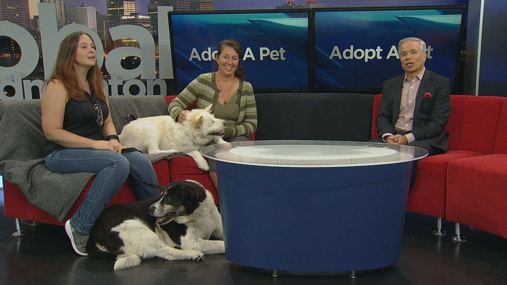 SCARS introduces us to a pair of senior dogs