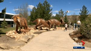 Town of Drumheller welcomes back tourists as Royal Tyrrell Museum reopens