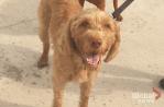 Oshawa city councillor looking to limit dog tethering