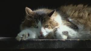 How to keep pets cool in extreme heat (00:55)