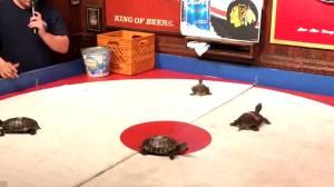 The Kentucky Turtle Derby