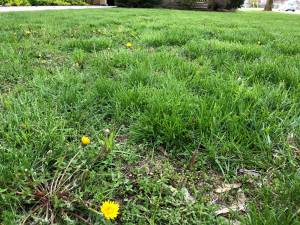 'Slow Mow May' urging Canadians to mow their lawn less, or not at all, this month (02:40)