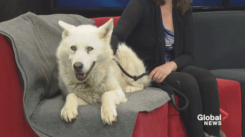 SCARS adoptable pets: Saturday, Feb. 22 | Watch News Videos Online