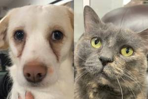 Shelter Pet Project Feb. 28 – Minou and Bright (01:35)