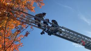 10-year-old boy rescued from tree by Dieppe, N.B. firefighters