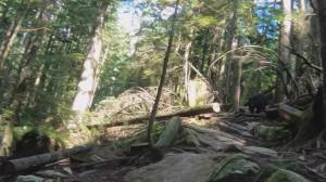 Black bear chases three B.C. mountain bikers on Mount Seymour trail