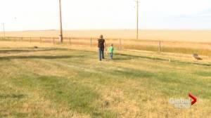 Southern Alberta landowners seeing spike in grasshopper population (01:48)