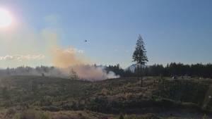 Fire destroys up to 1,000 trees at Nanaimo's Gogo Christmas Tree Farm (01:40)