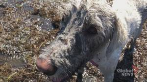 N.B. clam-digging dog has a nose for seafood