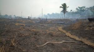 Few signs of life in 10-kilometre stretch of Amazon rainforest after fire
