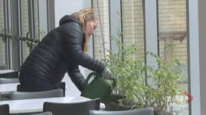 Staff at Dawson College in Montreal take on Earth Day Challenge (01:58)