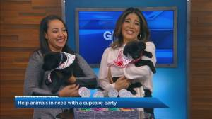 Helping animals in need with a cupcake party