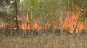 Local state of emergency declared in Prince Albert, Sask. and surrounding areas as wildfire burns nearby (01:32)