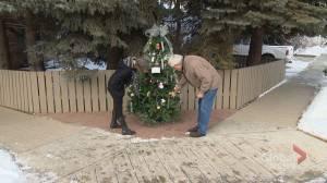 Calgary couple helps connect neighbourhood with community tree