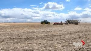 2021 seeding season underway in southern Alberta (01:49)
