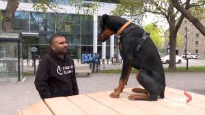 Montreal man fights back after denied apartment over therapy dog (01:49)