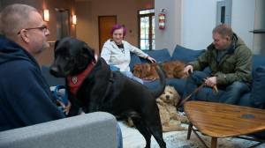 Service dogs helping veterans and first responders cope with PTSD