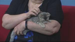 Adopt A Pal: Craig Street Cats (02:43)